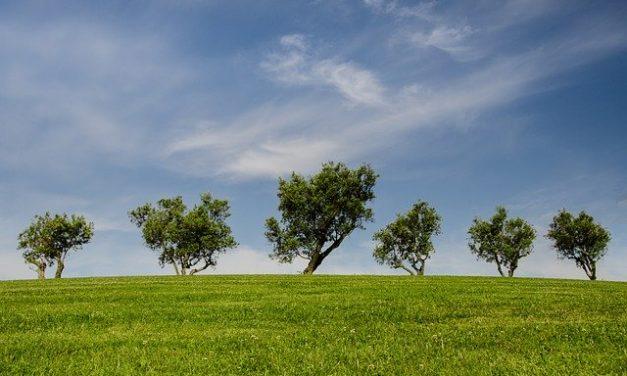 Connaissez-vous le Syndicat National de l'Environnement (SNE)?